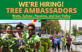tree ambassadors